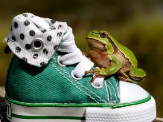 Собирать пазл Жабка на кроссовке  онлайн