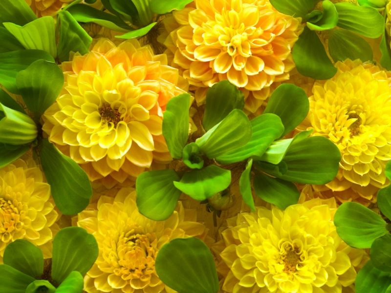 Пазл Собирать пазлы онлайн - Желтые цветы