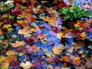 Собирать пазл Живая мозаика осени онлайн