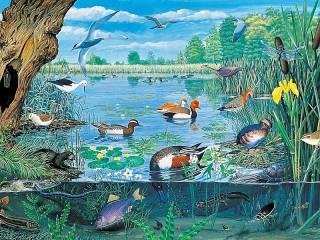 Собирать пазл Жизнь на озере онлайн
