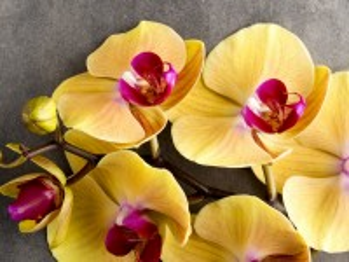 Собирать пазл Жёлтые орхидеи онлайн