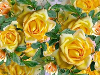 Собирать пазл Жёлтые розы онлайн