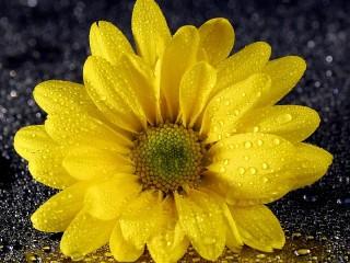 Собирать пазл Жёлтый на чёрном онлайн