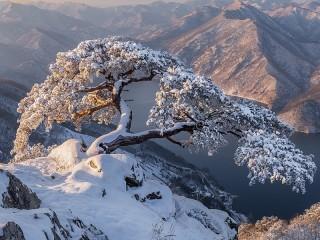 Собирать пазл Зима в Южной Корее онлайн