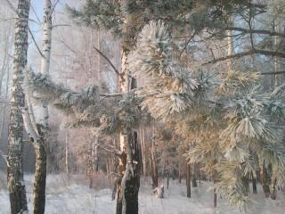 Собирать пазл Зимнее очарование онлайн