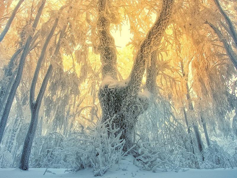 Пазл Собирать пазлы онлайн - Зимний туман
