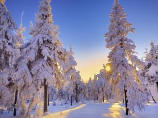 Собирать пазл Зимняя зорька онлайн