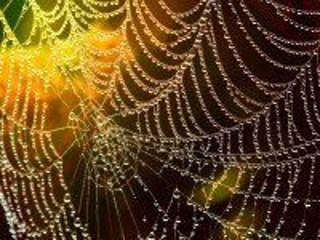 Собирать пазл Золотая паутина онлайн