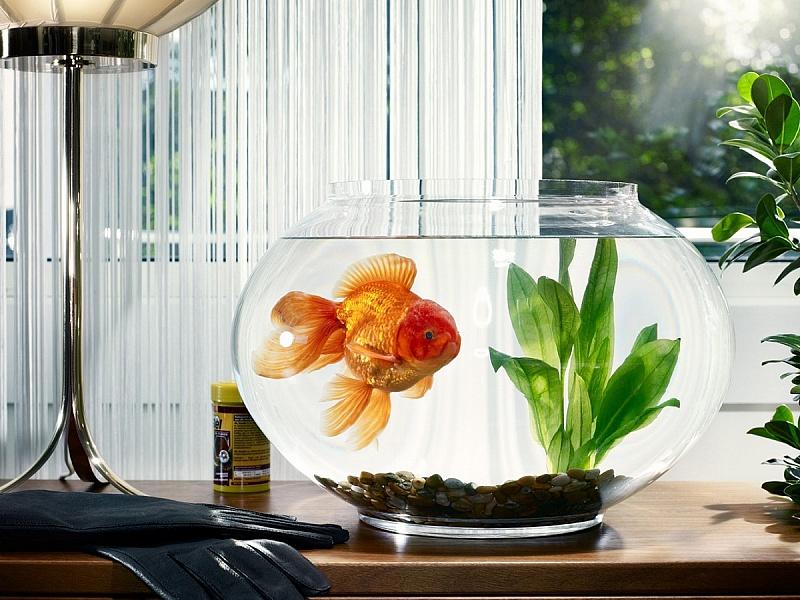 Пазл Собирать пазлы онлайн - Золотая рыбка