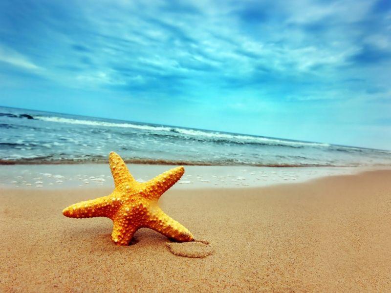 Пазл Собирать пазлы онлайн - Звезда на пляже