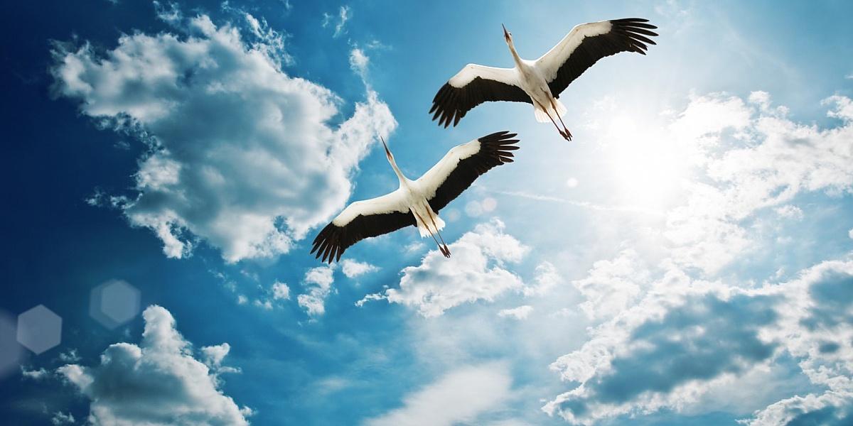 Сбереги влюблённых и крылатых