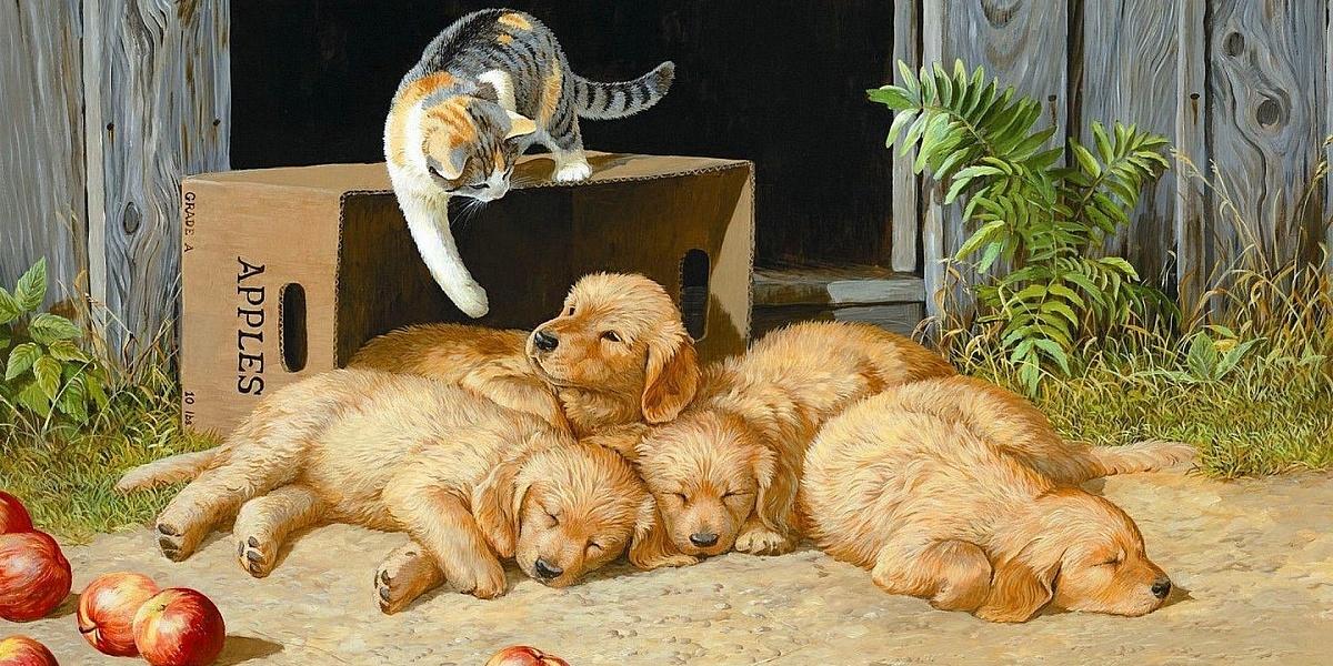 картинки кот и собака во дворец