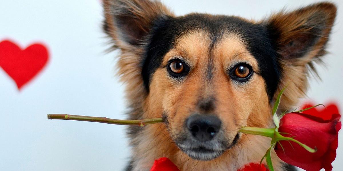 Иконой казанской, открытка с животными днем рождения