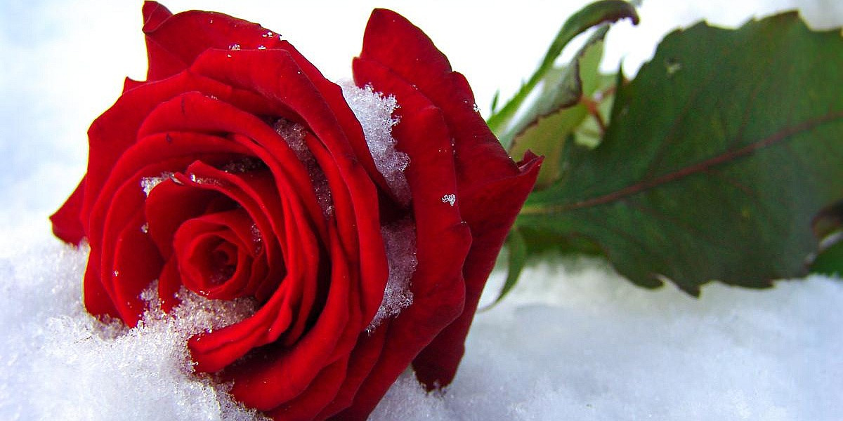 Пасхой, открытка с цветами на снегу