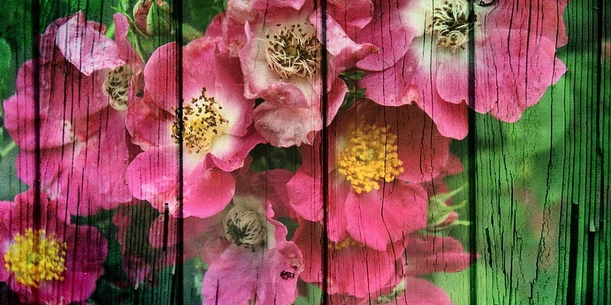 зря картинки из цветов на забор мессенджер