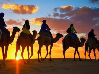 Собирать пазл Верблюжья вереница онлайн