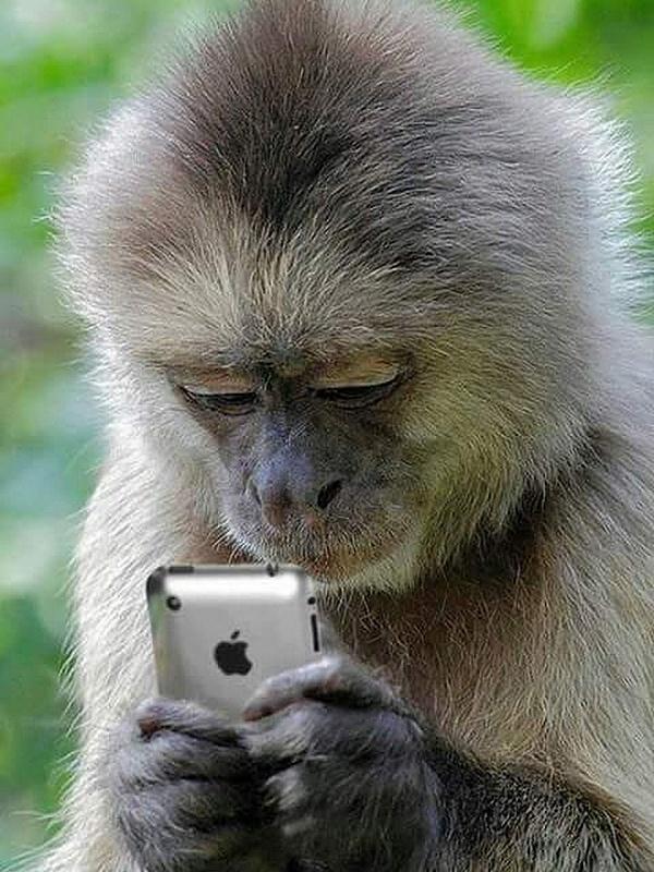 Демотиваторы для мобильного