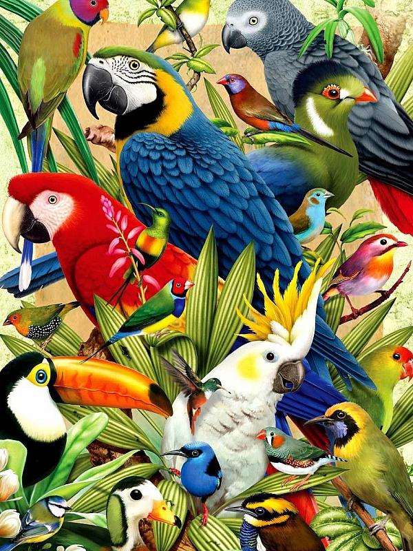 Пазл Собирать пазлы онлайн - Попугай