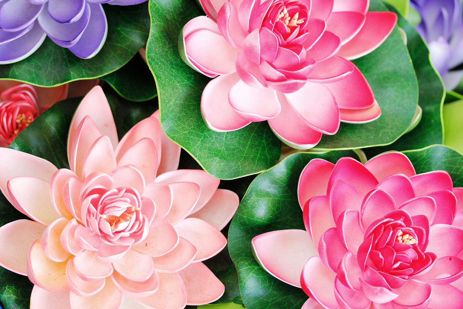 Цветы лотоса высокого разрешения