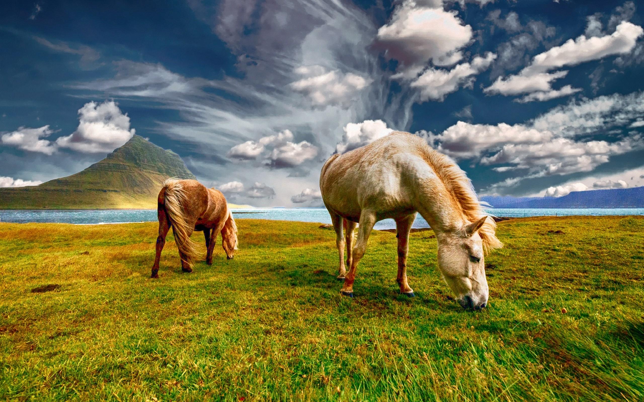 Лошади в поле  № 2021269 бесплатно