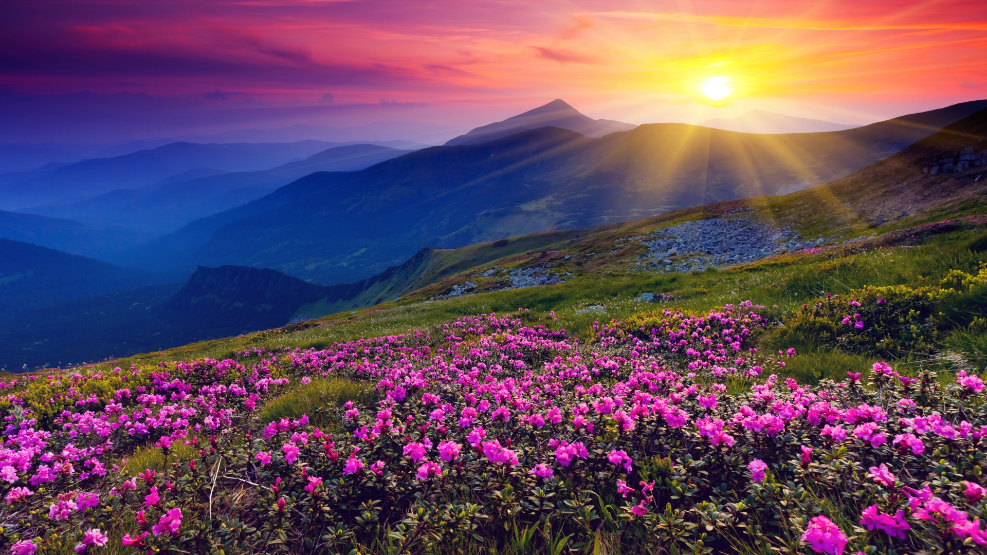 цветы поляна горы холм небо  № 3836166 без смс