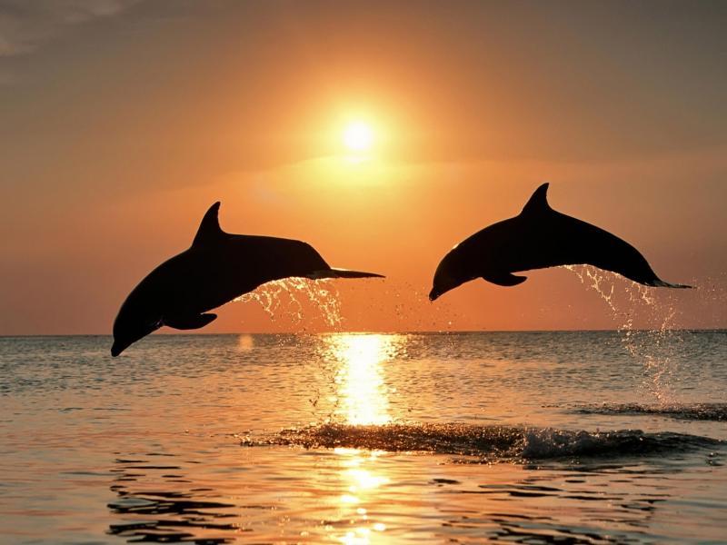 Фото дельфины на аву в