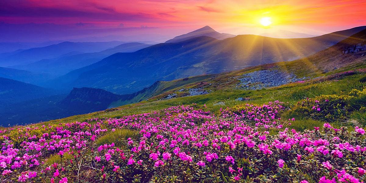 В поле цветов